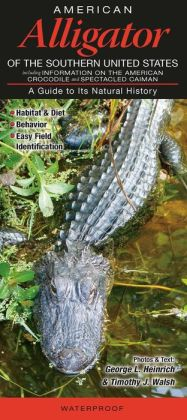 American Alligator of the Southern United States