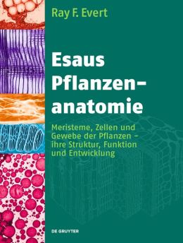 Esaus Pflanzenanatomie / Plant Anatomy