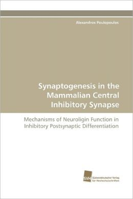 Synaptogenesis In The Mammalian Central Inhibitory Synapse