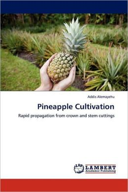 Pineapple Cultivation