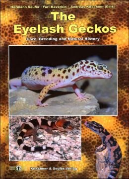 The Eyelash Geckos, Care, Breeding and Natural History