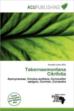 Tabernaemontana Citrifolia