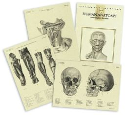 Human Anatomy Plates for Artists, Set of 48